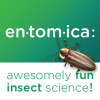 Entomica  Insects Interactive Exhibits